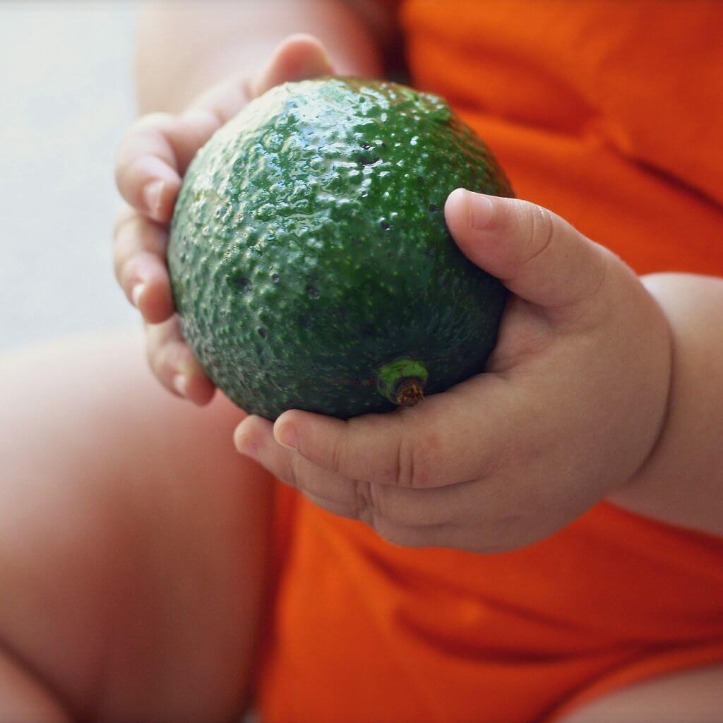 Baby-Holding-Avocado-Blog-Page-How-To-Make-HomeMade-Baby-Food