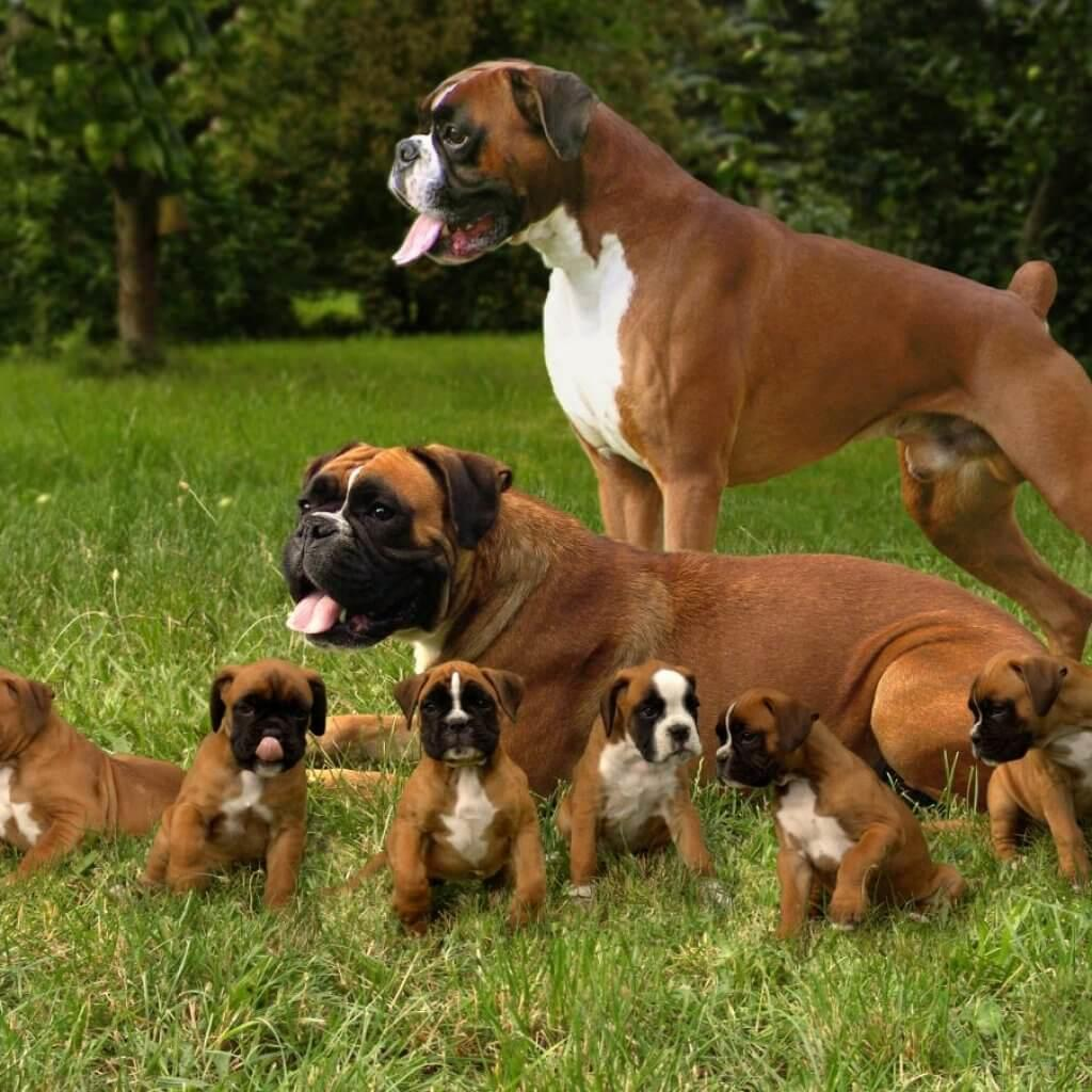 Dog Breeds That Don T Need Much Exercise