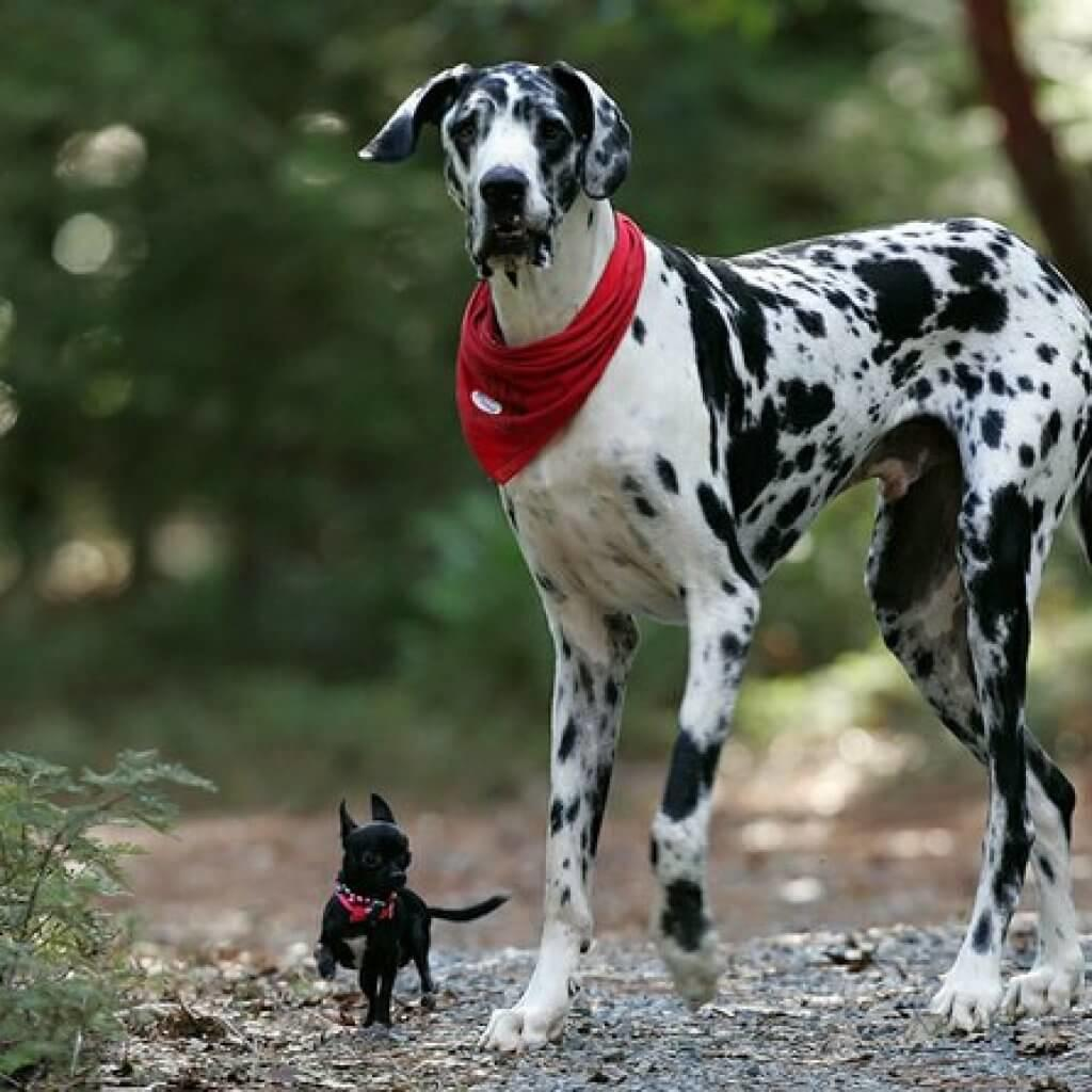 Choosing-The-Family-Dog-Introduce-Your-Kids-First-Dog