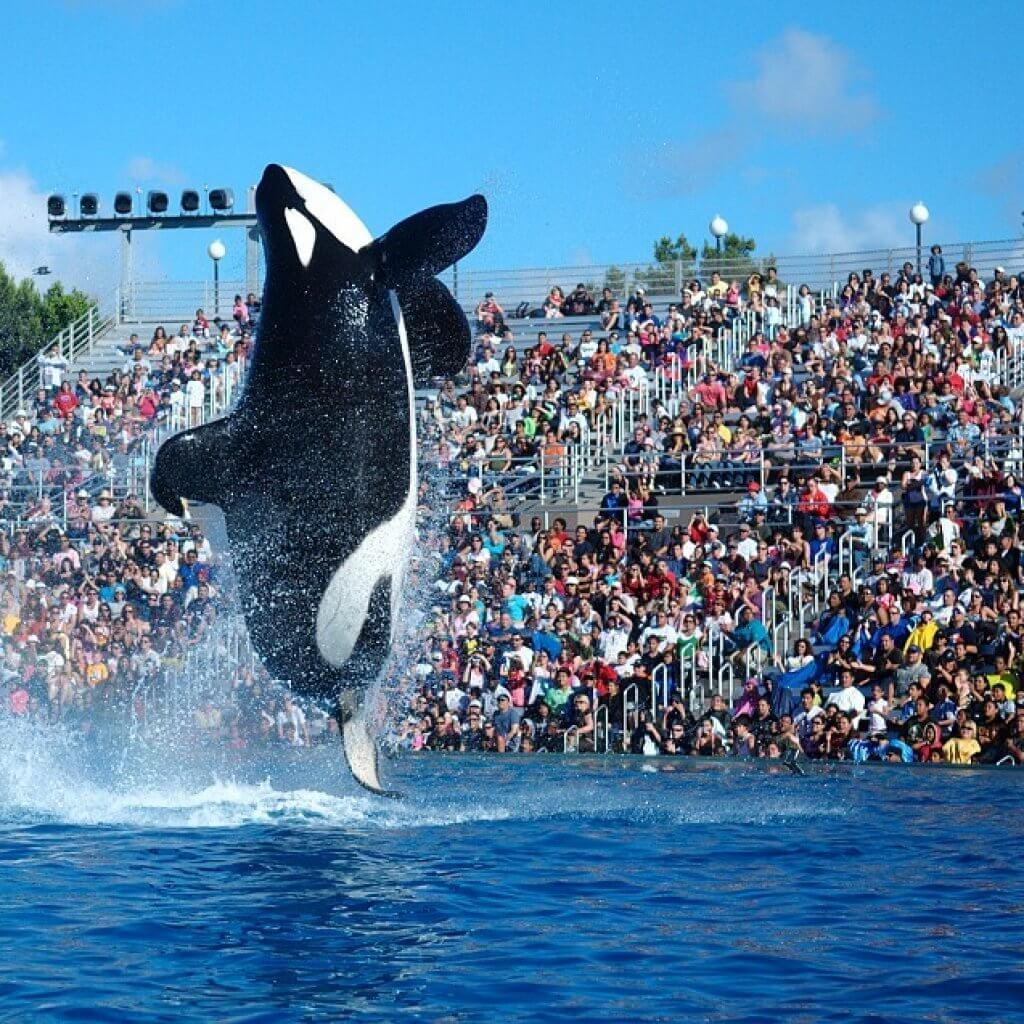 Sea-World-Orlando-Florida-Best-Amusement-Parks-for-Kids-Blog-Page