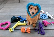 Check out the Best Dog Toys & Teething Chews.