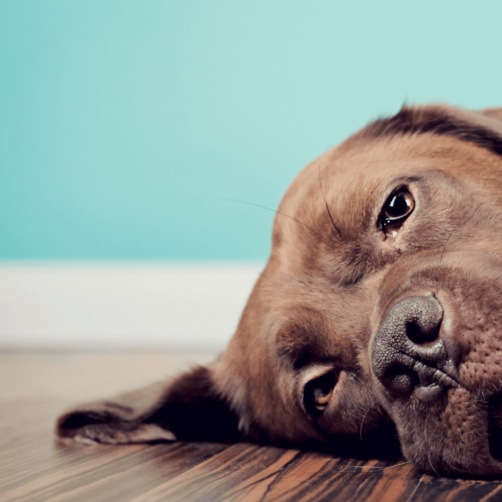 When Your Family Dog Or Cat Is Sick How To Help L Borncute.com
