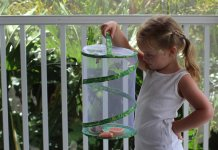 On this page you can find the best butterfly kits for growing or keeping.