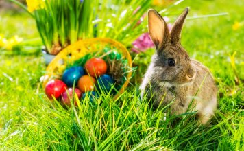 Unique Easter Basket Ideas for the Family