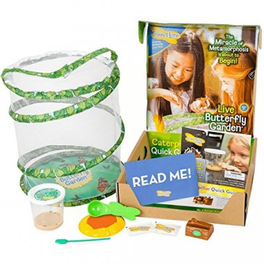 Insect Lore Deluxe Butterfly Garden with Live Cup of Caterpillars