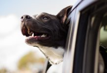 Tips on How to Travel with a Large Dog as a Family