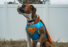 Our list of the Best Dog Halloween Costumes.