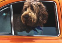Our review of the Best Dog Car Seats