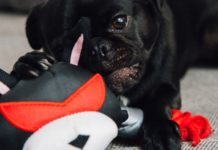 Here are the best Interactive dog toys.