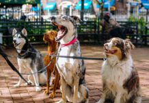 If you want to find your puppy easier when they wander around the neighborhood, here is a list of the best dog gps trackers.