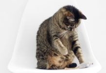 Check our list of the best cat toys, so your pets can have some fun while you're away.