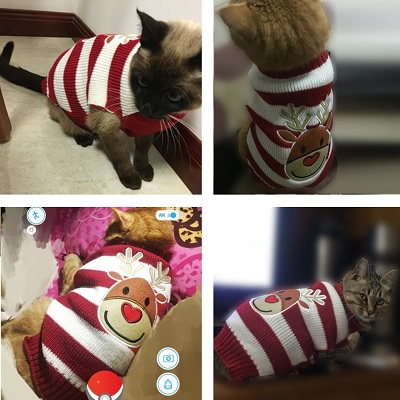 bobibi pet reindeer christmas sweater cat