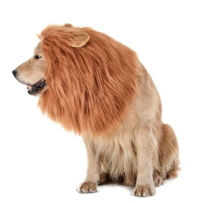 lion mane halloween dog costume side