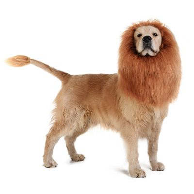 lion mane halloween dog costume materials