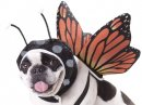 butterfly halloween dog costume design