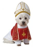 holy hound halloween dog costume