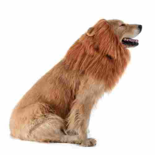 lion mane halloween dog costume design