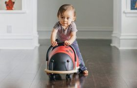10 Cool Bug Toys Reviewed in 2020