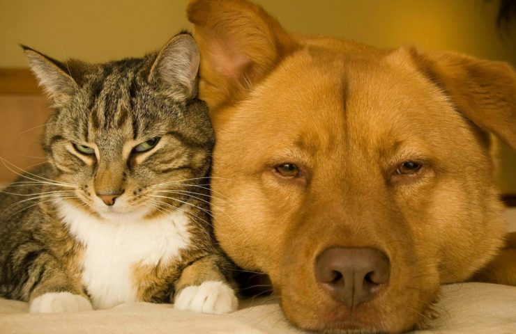 When Your Family Dog or Cat is Sick How to Help