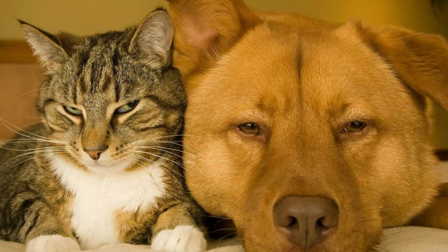 Read on to find out how to help your dog or cat when they are sick.