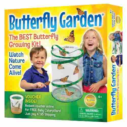 Insect Lore Butterfly Growing Set Toy
