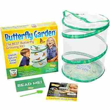 Insect Lore Butterfly Growing Kit Toy