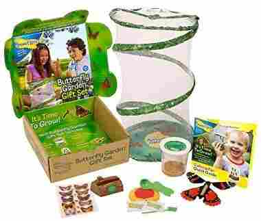 Insect Lore Deluxe Butterfly Garden Gift Set