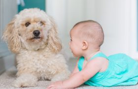 Introducing your Dog to your Baby: What to Expect