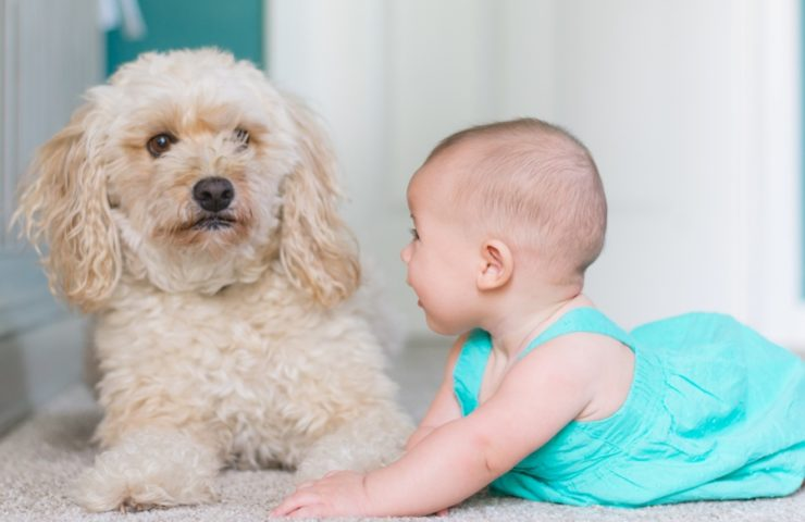 Here are some tips on introducing your dog to your newborn baby.