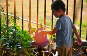 Kid-safe Plants to Grow in your Home
