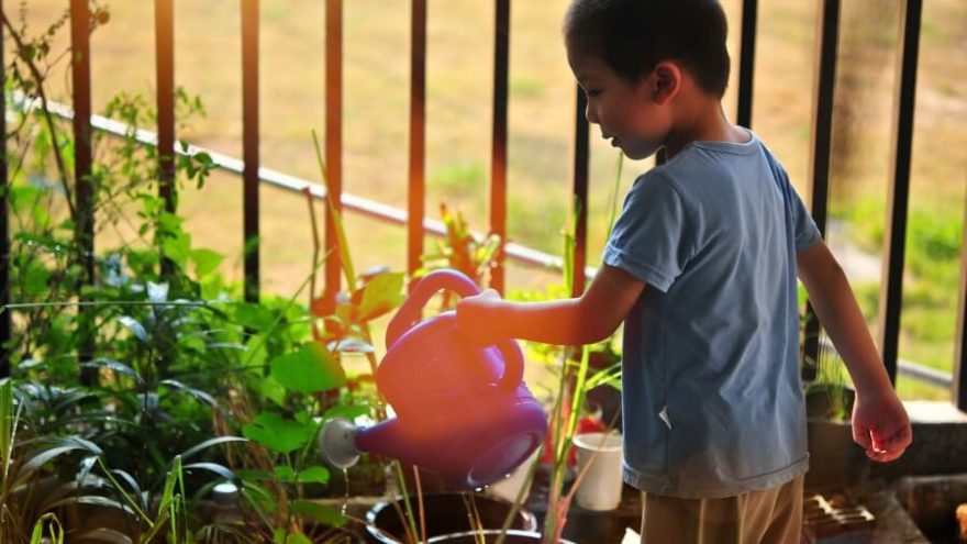 Read on to find out the best Kid-safe Plants to Grow in your Home