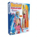 smartLab squishy human body science toy for kids box