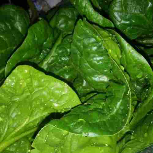 Spinach-Dark-Leafy-Greens-5-Weeks-Pregnant-Superfood-Pregnancy-Guide