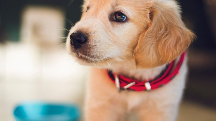 Here are the 6 most important things you should consider before getting a puppy for Christmas.
