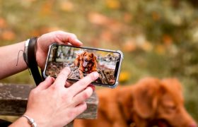 10 Best Pet Cameras Reviewed & Rated in 2020