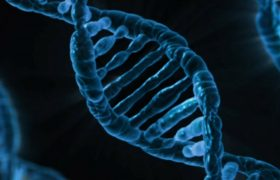 Personality Traits You Can Blame on DNA