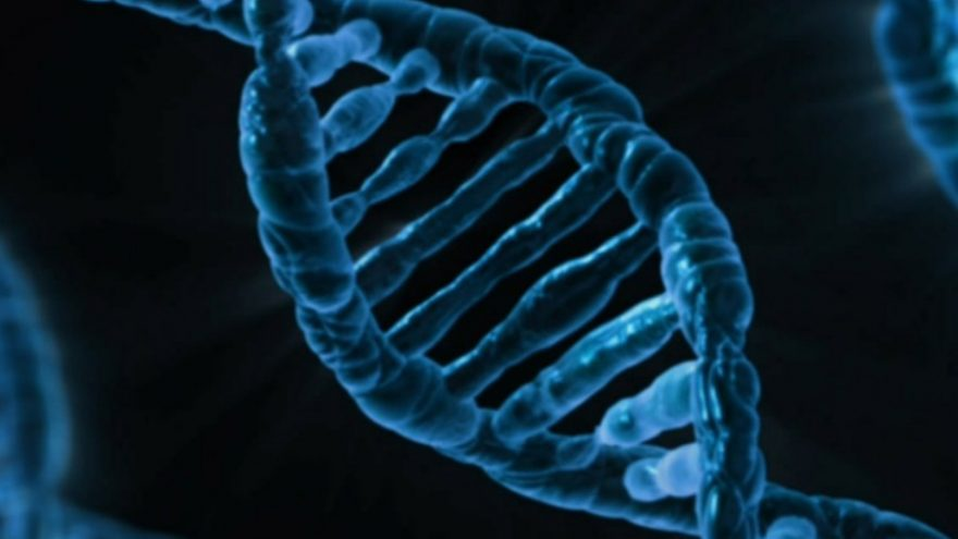 Read about the personality traits you can blame on your DNA.