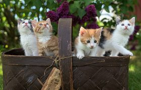 Best Cat Breeds for Children