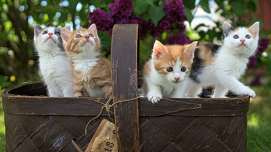 Featured here are the best cat breeds for children.