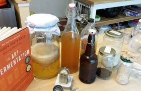 Healthy Family : Growing a Kombucha Scoby